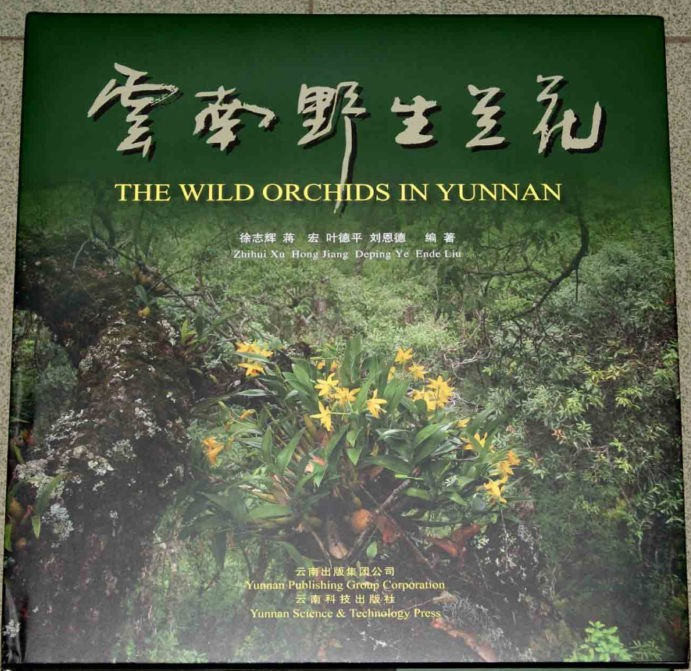 The Wild Orchids In Yunnan